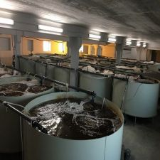 Installation of closed water supply and fish farming